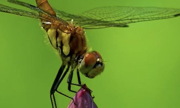 学而思-9元语文-蜻蜓