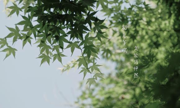 January 14,2020|翠湖宾馆MV